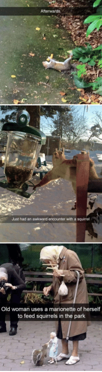 animalsnaps:Squirrel snaps: Afterwards.   Just had an awkward encounter with a squirrel   Old woman uses a marionette of herself  to feed squirrels in the park animalsnaps:Squirrel snaps