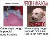Spongebob reactions: AFTOR3 MARJIONA  before a marijuana  NGERY  Calm slepy doggo Mean angery doggo  None do him a like  ls paecful  Has to run from popo  none troubles Spongebob reactions