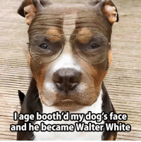 dog face: age booth  d my dog face  he became  an