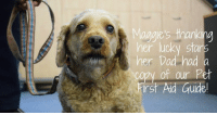 """Advice, Dad, and Dogs: aggie's thanking  er luck Star  her Dad had a  copy of our Pet  irst Aid Guide  0 """"My dog Maggie wasn't herself. She was eating dinner with my other dogs when she started to show signs of choking and was clearly distressed, coughing and wheezing. I panicked and didn't know what to do so I grabbed the RSPCA's Pet First Aid Guide. It clearly said to give her 4-5 firm but gentle blows between the shoulders. Thankfully, the piece of food dislodged and she was okay. I was so glad I had the Pet First Aid Guide on hand.""""  Luckily Martin was prepared for an animal emergency - you can be better prepared too. Order your FREE copy of our PET FIRST AID GUIDE NOW http://bit.ly/2fll9DX   """"I don't know what I would have done without the guide. It truly saved her life. I called the vet to ask them if I needed to bring her to see them, they said to keep an eye on her and call them if there were any further problems with her breathing. Thankfully she was okay.  """"I am so, so grateful for the RSPCA Pet First Aid Guide, and the clear advice it gave."""""""
