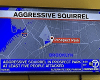 Memes, News, and Brooklyn: AGGRESSIVE SQUIRREL  278  Prospect Park  BROOKLYN  AGGRESSIVE SQUIRREL IN PROSPECT PARK 16:38  AT LEAST FIVE PEOPLE ATTACKED  72°  PARKING  ALTERNATE SIDE PARKIN  EYEWITNESS NEWS 😂Wth