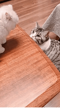 Helps, Got, and Cat: Agile cat helps kitten that just missed a jump.