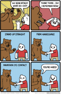 Memes, Bear, and Bears: AH! BEAR ATTACK!  WHAT DO DO?!  STAND UP STRAIGHT  MAINTAIN EYE CONTACT  THINK! THINK... OH!  REMEMBER NOW!  FIRM HANDSHAKE  YOU'RE HIRED!  MRLOVENSTEINCOM Slenderman