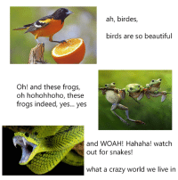 wow: ah, birdes,  birds are so beautiful  Oh! and these frogs,  oh hohohhoho, these  frogs indeed, yes... yes  and WOAH! Hahaha! watch  out for snakes!  what a crazy world we live in wow