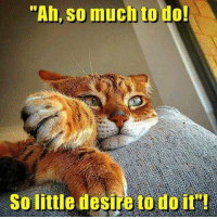 """Ah So: """"Ah, so much to do!  So little desire to do it"""