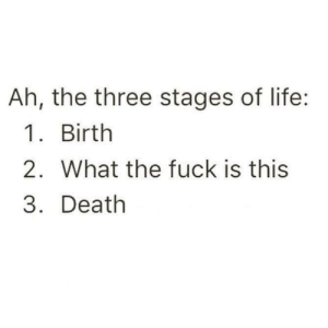 What The Fuck Is This: Ah, the three stages of life:  1. Birth  2. What the fuck is this  3. Death