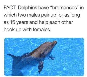 Ah yes 'bromance' by thatoneguy_67 MORE MEMES: Ah yes 'bromance' by thatoneguy_67 MORE MEMES