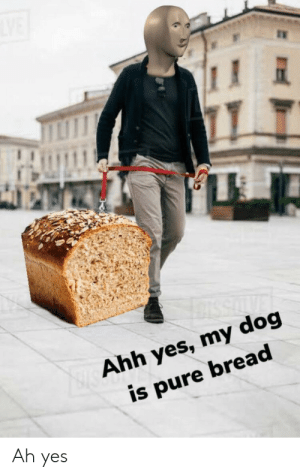 Ah Yes https://t.co/hLlJqwy9lY: Ahh yes, my dog  is pure bread  Ah yes Ah Yes https://t.co/hLlJqwy9lY