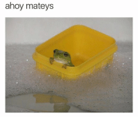 Life, Memes, and Best: ahoy matey.s He's living his best froggin' life