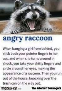 Ass, Internet, and Memes: AII  angry raccoon  When banging a girl from behind, you  stick both your pointer fingers in her  ass, and when she turns around in  shock, you take your shitty fingers and  circle around her eyes, making the  appearance of a raccoon. Then you run  out of the house, knocking over the  trash can on the way out.  com  The Internet Scavengers <p>Naughty memes and pics  Wicked chuckles  PMSLweb </p>