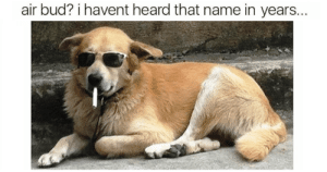 Dog Memes Of The Day 32 Pics – Ep37 #dogs #doglovers #lovelyanimalsworld - Lovely Animals World: air bud? i havent heard that name in years... Dog Memes Of The Day 32 Pics – Ep37 #dogs #doglovers #lovelyanimalsworld - Lovely Animals World