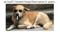 funny dog memes clean funny dog memes 2018 dog meme face cute dog memes dog memes best dog memes: air bud? i havent heard that name in years... funny dog memes clean funny dog memes 2018 dog meme face cute dog memes dog memes best dog memes