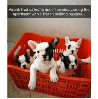 Some cute and fuzzy faces to make your day a little better | @cuteandfuzzybunch: Airbnb host called to ask if I minded sharing the  apartment with 5 french bulldog puppies... Some cute and fuzzy faces to make your day a little better | @cuteandfuzzybunch