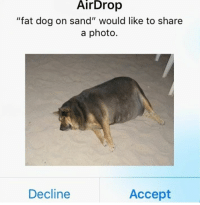 "Fat, Dog, and Photo: AirDrop  ""fat dog on sand"" would like to share  a photo.  Decline  Accept"
