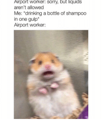 Drinking, Sorry, and Animal: Airport worker: sorry, but liquids  aren't allowed  Me: *drinking a bottle of shampoo  in one gulp*  Airport worker: 48 Funniest Animal Photos That Will Make You Laugh No Matter What