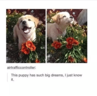 <p>Dream big little guy anything is pawssible</p>: airtrafficcontroller:  This puppy has such big dreams, I just know  it. <p>Dream big little guy anything is pawssible</p>