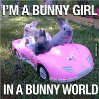 PMA BUNNY GIRL  IN A BUNNY WORLD TAG 5 FRIENDS! FOLLOW MY NEW ACCOUNT @waltay @waltay @waltay @waltay @waltay thanks help it get to 20k!!
