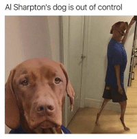 Wtf is going on with Al Sharpton!?!!: Al Sharpton's dog is out of control Wtf is going on with Al Sharpton!?!!