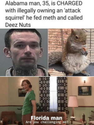 An Attack: Alabama man, 35, is CHARGED  with illegally owning an 'attack  squirrel' he fed meth and called  Deez Nuts  Florida man  Are you challenging me?