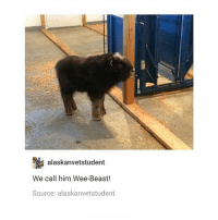 Beastly: alaskanvetstudent  We call him Wee-Beast!  Source: alaskanvetstudent