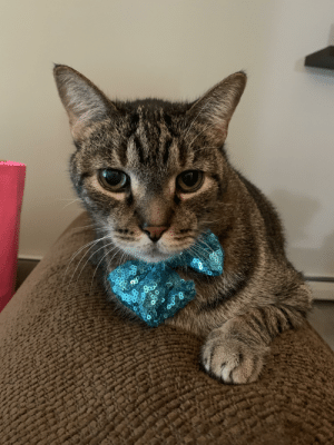 Albert graciously agreed to wear a bow tie for my quarantine birthday.: Albert graciously agreed to wear a bow tie for my quarantine birthday.