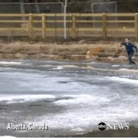Camera crew in Alberta, Canada captures man leaping into frozen pond to rescue his dog. They emerged chilled but unharmed. Via @ABCNews @pmwhiphop: Alberta Canada  obc NEWS Camera crew in Alberta, Canada captures man leaping into frozen pond to rescue his dog. They emerged chilled but unharmed. Via @ABCNews @pmwhiphop