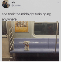 Memes, New York, and Subway: ale  @oafale  she took the midnight train going  anywhere  NEW YORKERS KEEP  NEW YORK SAFE  tlean on door Am I the only person who would pay extra to sit on a subway car that had this dog