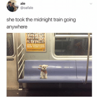 Animals, Cute, and Cute Animals: ale  @oafale  she took the midnight train going  anywhere  NEW YORKERS KEE  NEW YORK SAFE  l  ean on  door SWIPE & TAG ❤️ follow me @v.cute.animals 👈