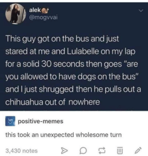 "Chihuahua, Dogs, and Memes: alek  @mogvvai  This guy got on the bus and just  stared at me and Lulabelle on my lap  for a solid 30 seconds then goes ""are  you allowed to have dogs on the bus""  and I just shrugged then he pulls out a  chihuahua out of nowhere  npositive-memes  this took an unexpected wholesome turn  3,430 notes That was unexpected."