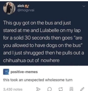 "Chihuahua, Dogs, and Memes: alek  @mogvvai  This guy got on the bus and just  stared at me and Lulabelle on my lap  for a solid 30 seconds then goes ""are  you allowed to have dogs on the bus""  and I just shrugged then he pulls out a  chihuahua out of nowhere  positive-memes  this took an unexpected wholesome turn  3,430 notes Unexpected Chihuahua"