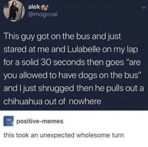 "Chihuahua, Dogs, and Memes: alek  @mogvvai  This guy got on the bus and just  stared at me and Lulabelle on my lap  for a solid 30 seconds then goes ""are  you allowed to have dogs on the bus""  and I just shrugged then he pulls out a  chihuahua out of nowhere  positive-memes  this took an unexpected wholesome turn A plot twist of the wholesome variety"