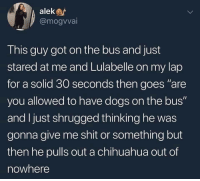 """Chihuahua, Dogs, and Shit: alekar  @mogvvai  This guy got on the bus and just  stared at me and Lulabelle on my lap  for a solid 30 seconds then goes """"are  you allowed to have dogs on the bus""""  and I just shrugged thinking he was  gonna give me shit or something but  then he pulls out a chihuahua out of  nowhere this took an unexpected wholesome turn"""