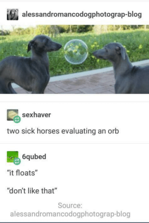 """Horses, Blog, and Sick: alessandromancodogphotograp-blog  sexhaver  two sick horses evaluating an orb  6qubed  """"it floats""""  """"don't like that""""  Source:  alessandromancodogphotograp-blog No like"""