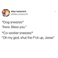 """Aww, Funny, and God: Alex losiovich  @Alex_losiovich  *Dog sneezes*  """"Aww. Bless you.""""  *Co-worker sneezes*  """"Oh my god, shut the f*ck up, Jesse"""" God Jesse would you stop that. @dogsbeingbasic is adorable"""