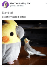 "<p>Wholesome motivational birb via /r/wholesomememes <a href=""https://ift.tt/2Ga34aL"">https://ift.tt/2Ga34aL</a></p>: Alex The Honking Bird  @AlexTheHonk  Stand tall  Even if you feel smol <p>Wholesome motivational birb via /r/wholesomememes <a href=""https://ift.tt/2Ga34aL"">https://ift.tt/2Ga34aL</a></p>"