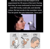"Alex The Parrot: Alex  the  Parrot  the  subject  of  was  experiment for 30 years at Harvard. During  this time, he was confirmed to have learned  over 100 words, could add, and identify  colors. His last words to his caretaker were:  You be good. See you tomorrow. I love you.""  an  LIE  DOWN  TRY  NOT TO CRY  CRY  A LOT"
