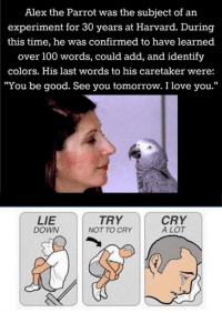 "sad react: Alex the Parrot was the subject of an  experiment for 30 years at Harvard. During  this time, he was confirmed to have learned  over 100 words, could add, and identify  colors. His last words to his caretaker were:  ""You be good. See you tomorrow. I love you.""  LIE  TRY  CRY  A LOT  NOT TO CRY  DOWN sad react"