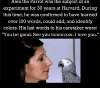 "<p>Wholesome Parrot</p>: Alex the Parrot was the subject of an  experiment for 30 years at Harvard. During  this time, he was confirmed to have learned  over 100 words, could add, and identify  colors. His last words to his caretaker were:  ""You be good. See you tomorrow. I love you."" <p>Wholesome Parrot</p>"