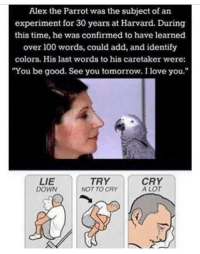 "Anaconda, Love, and I Love You: Alex the Parrot was the subject of an  experiment for 30 years at Harvard. During  this time, he was confirmed to have learned  over 100 words, could add, and identify  colors. His last words to his caretaker  were:  You be good. See you tomorrow. I love you.""  LIE  DOWN  TRY  NOT TO CRY  CRY  A LOT A wholesome parrot"