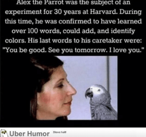 "failnation:  True love: Alex the Parrot was the subject of an  experiment for 30 years at Harvard. During  this time, he was confirmed to have learned  over 100 words, could add, and identify  colors. His last words to his caretaker were:  ""You be good. See you tomorrow. I love you.'""  Uber Humor Steve holt failnation:  True love"