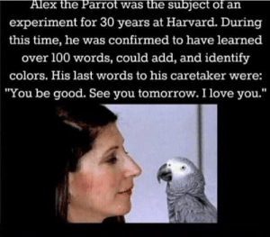 "Smartest boy will never be forgotten: Alex the Parrot was the subject of an  experiment for 30 years at Harvard. During  this time, he was confirmed to have learned  over 100 words, could add, and identify  colors. His last words to his caretaker were:  ""You be good. See you tomorrow. I love you.'"" Smartest boy will never be forgotten"