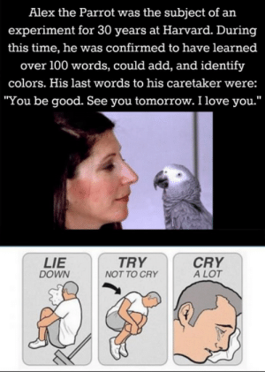 "Alex The Parrot: Alex the Parrot was the subject of an  experiment for 30 years at Harvard. During  this time, he was confirmed to have learned  over 100 words, could add, and identify  colors. His last words to his caretaker were:  ""You be good. See you tomorrow. I love you.""  LIE  TRY  CRY  A LOT  DOWN  NOT TO CRY"