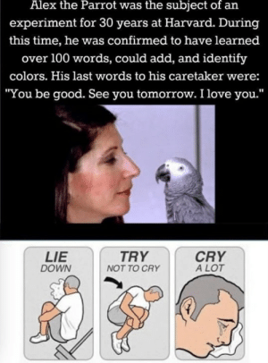 "Alex The Parrot: Alex the Parrot was the subject of an  experiment for 30 years at Harvard. During  this time, he was confirmed to have learned  over 100 words, could add, and identify  colors. His last words to his caretaker were:  ""You be good. See you tomorrow. I love you.""  LIE  DOWN  CRY  A LOT  TRY  NOT TO CRY"