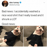 Bad, Cute, and News: alex tumay  @alextumay  Bad news: I accidentally washed a  nice wool shirt that I really loved and it  shrunk a LOT  Good news: he hates it but he looks so cute 😍