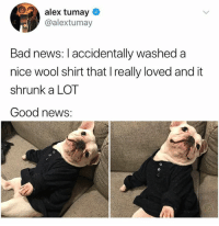 @hilarious.ted is my favorite animal memes page: alex tumay  @alextumay  Bad news: I accidentally washed a  nice wool shirt that I really loved and it  shrunk a LOT  Good news: @hilarious.ted is my favorite animal memes page