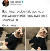 Great news @alextumay: alex tumay  @alextumay  Bad news: I accidentally washed a  nice wool shirt that Ireally loved and it  shrunk a LOT  Good news: Great news @alextumay