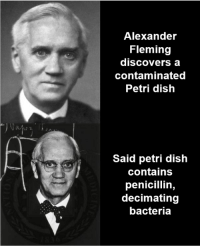 "Memes, Dish, and History: Alexander  Fleming  discovers a  contaminated  Petri dish  Said petri dish  contains  penicillin,  decimating  bacteria WWII Memes are banned, but ""Chance favours only the prepared mind"""