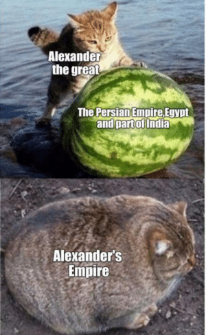 Damm he thicc: Alexander  the great  The Persian Empire Egypt  and part of India  Alexander's  Empire Damm he thicc
