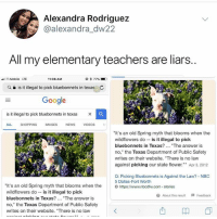 "Google, Memes, and News: Alexandra Rodriguez  @alexandra_dw22  All my elementary teachers are liars.  T-Mobile LTE  11:06 AM  @ * 77%  Q e is it illegal to pick bluebonnets in texas C  Google  is it illegal to pick bluebonnets in texas X  ALL SHOPPING IMAGES NEWS VIDEOS  ""It's an old Spring myth that blooms when the  wildflowers dois it illegal to pick  bluebonnets in Texas?. ""The answer is  no,"" the Texas Department of Public Safety  writes on their website. ""There is no law  against picking our state flower. Apr 3, 2012  Q: Picking Bluebonnets is Against the Law? NBC  5 Dallas-Fort Worth  It's an old Spring myth that blooms when the  wildflowers do -is it illegal to pick  bluebonnets in Texas?... ""The answer is  no,"" the Texas Department of Public Safety  writes on their website. ""There is no law  https://www.nbcdfw.com stories  About ths Feedback Who is joining me in a class action lawsuit against all my old teachers?"
