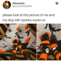 Friday, Memes, and Today: Alexandria  @ALEX47ANDRIA  please look at this picture of me and  my dog with spooky socks on Post 1206: it's Friday and tak someone who needs this today